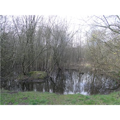 Pond in Birchwood Nature Park surrounded by trees and greenery.